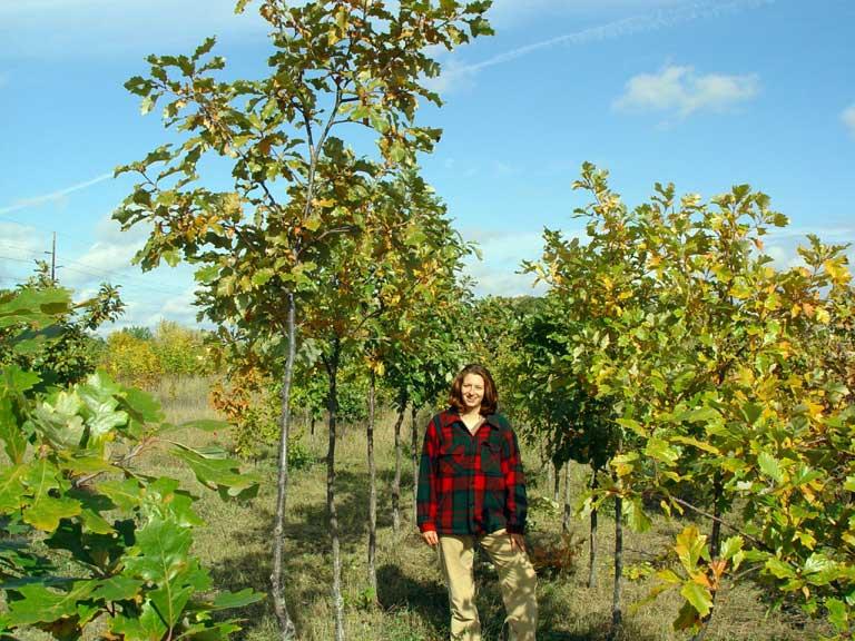 white oak nursery thenurseries - White Oak Garden Center