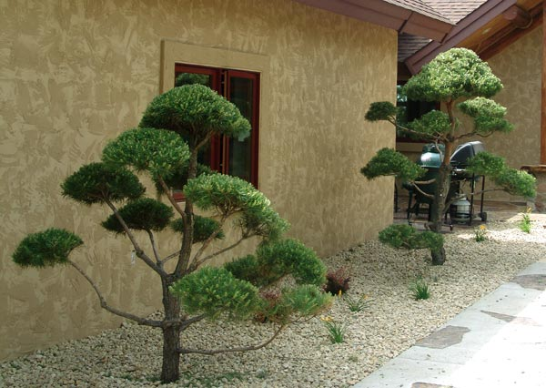topiary trees in front of a home